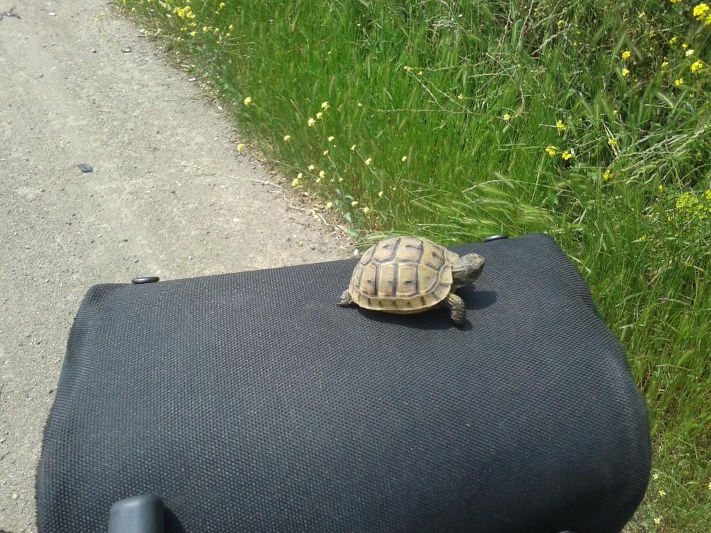 Michelangelo - a teenage turtle.