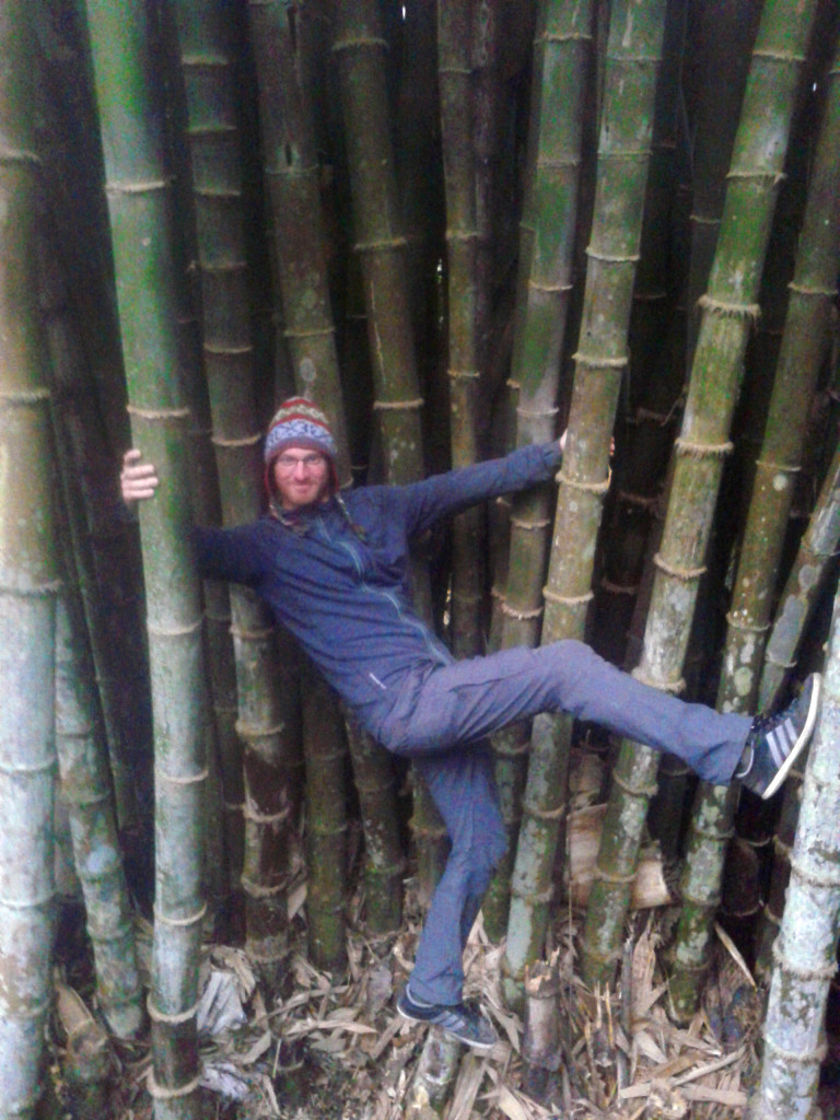 Bamboo can get pretty big