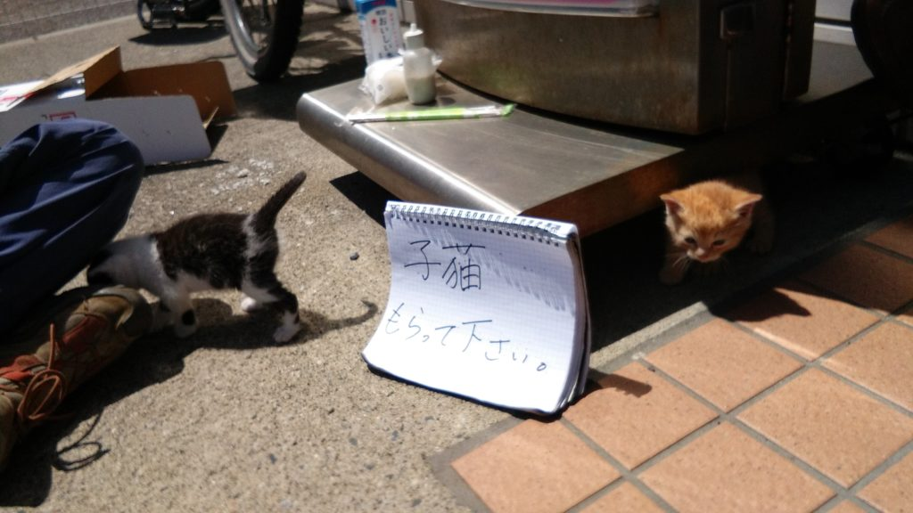 """The sign says: """"Please take these cats"""""""