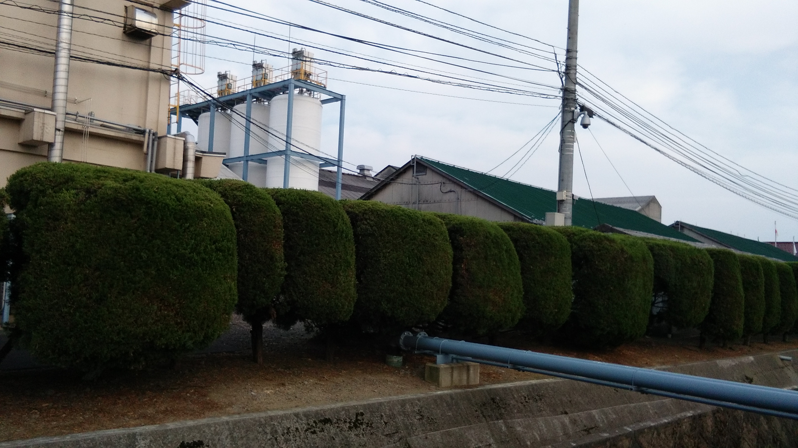 Perfectly cut trees around a factory building