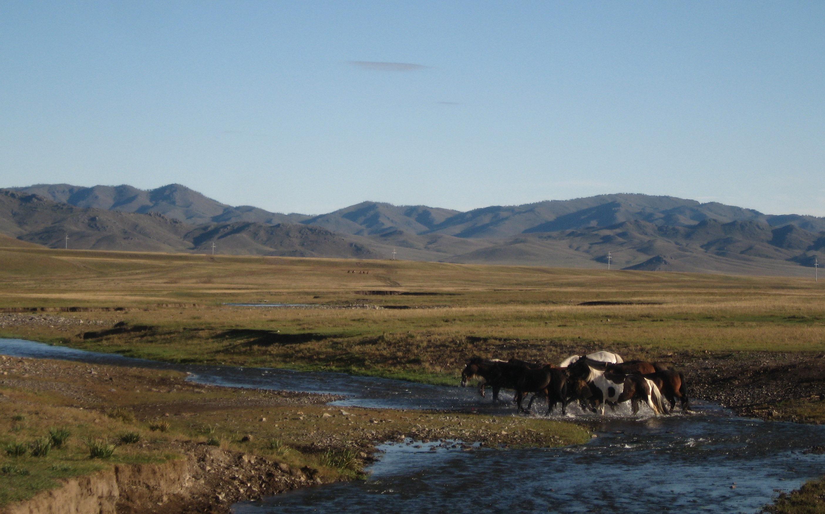Horses crossing a river - Mongolia
