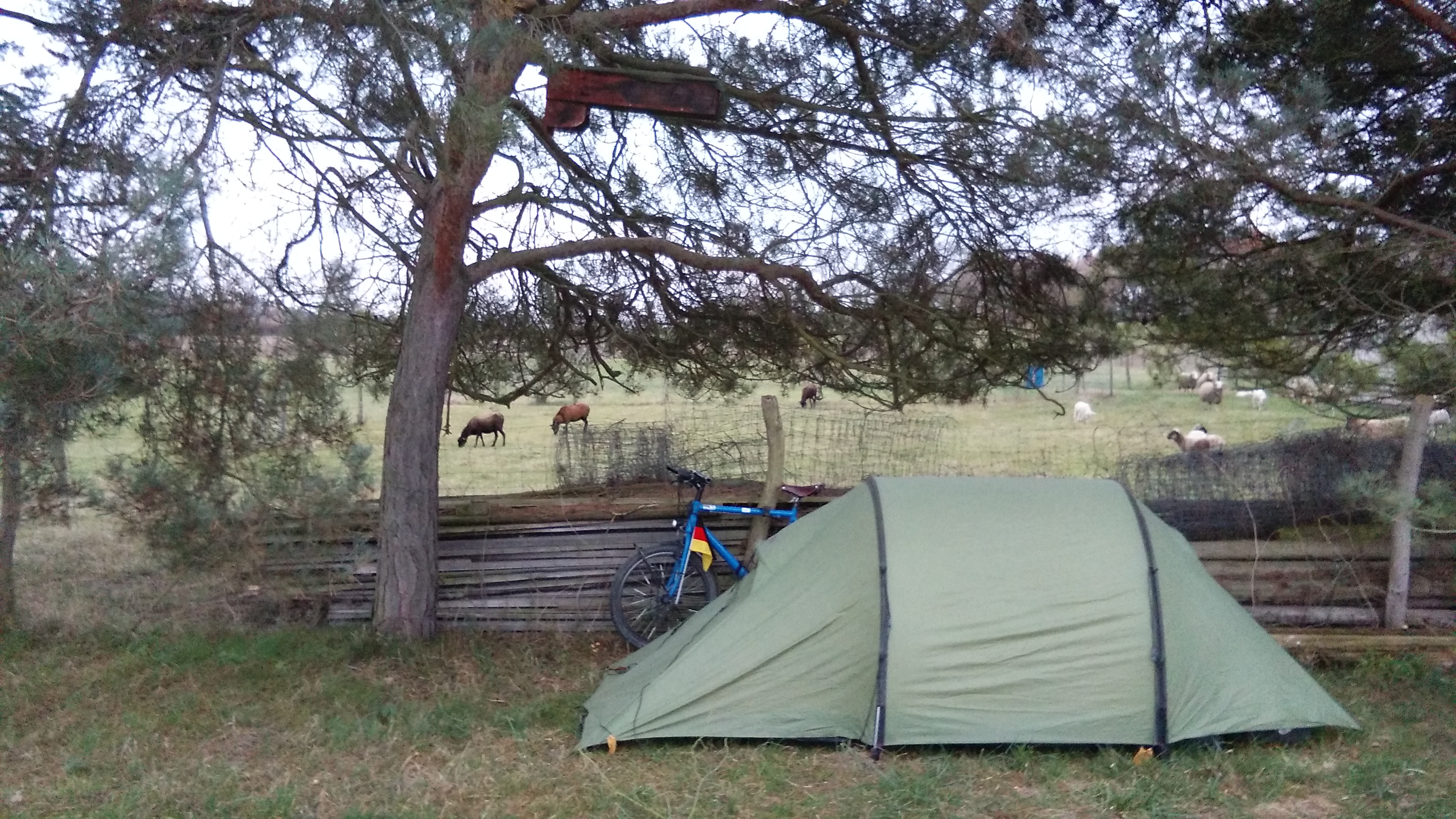 Last night in the tent. There were even some sheep behind the fence.